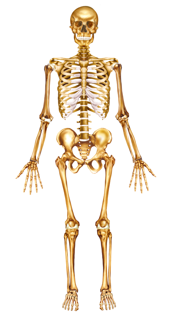Picture Anatomical Position Human Body http://www.medicalsciencenavigator.com/orientation-in-anatomy