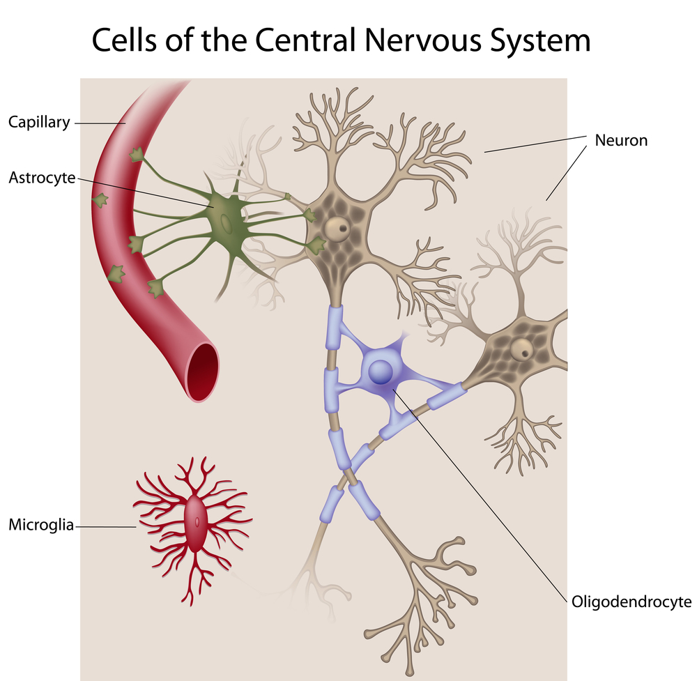 Artist diagram of the cell types found in the human brain