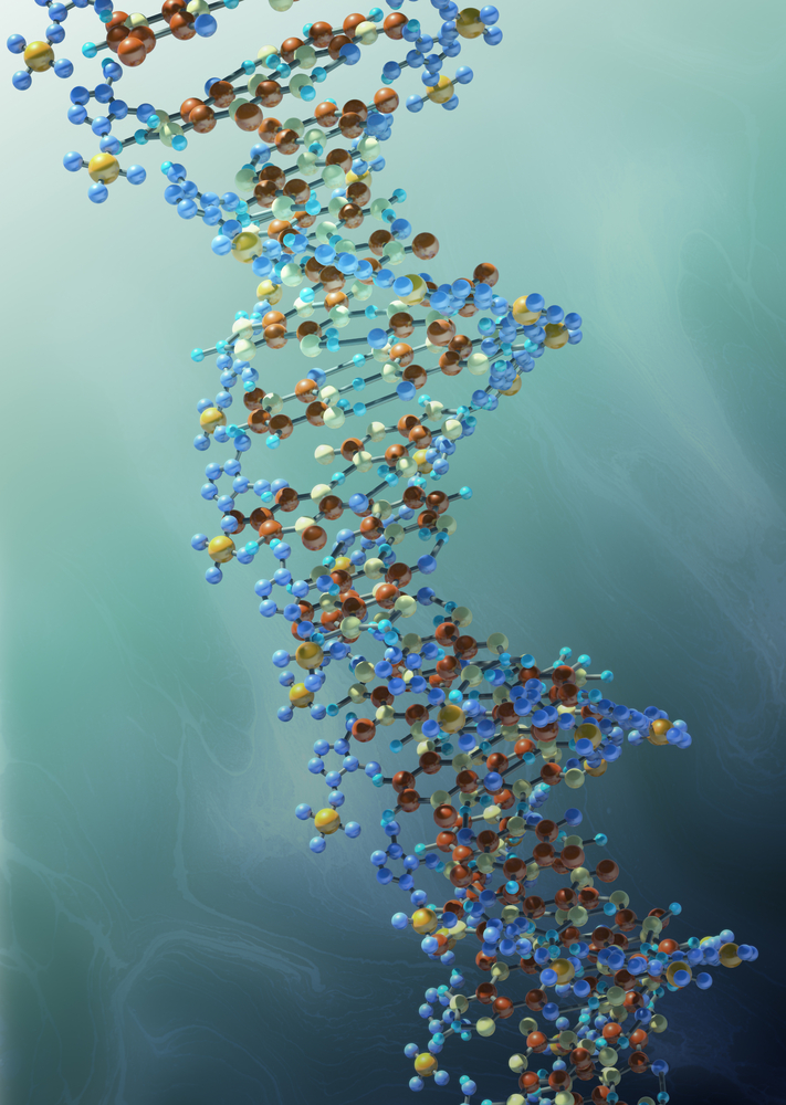 Ball and stick model of double strand DNA alpha helix