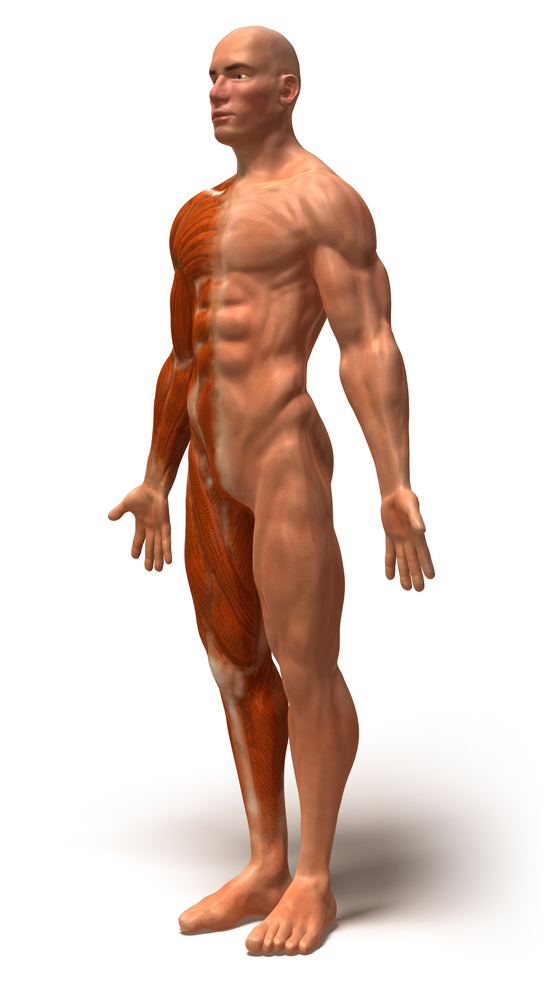Man standing in anatomical position