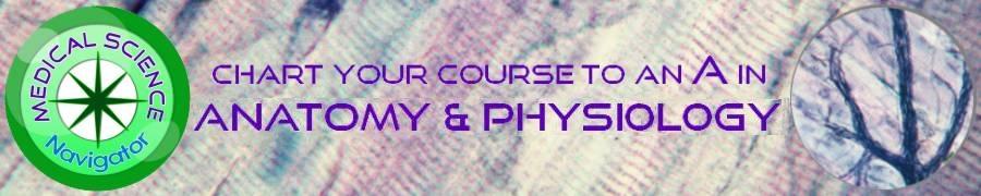 Online Anatomy Resources  