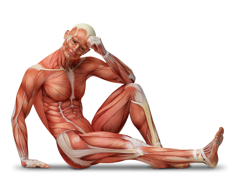 Man sitting demonstrating opposing muscle actions