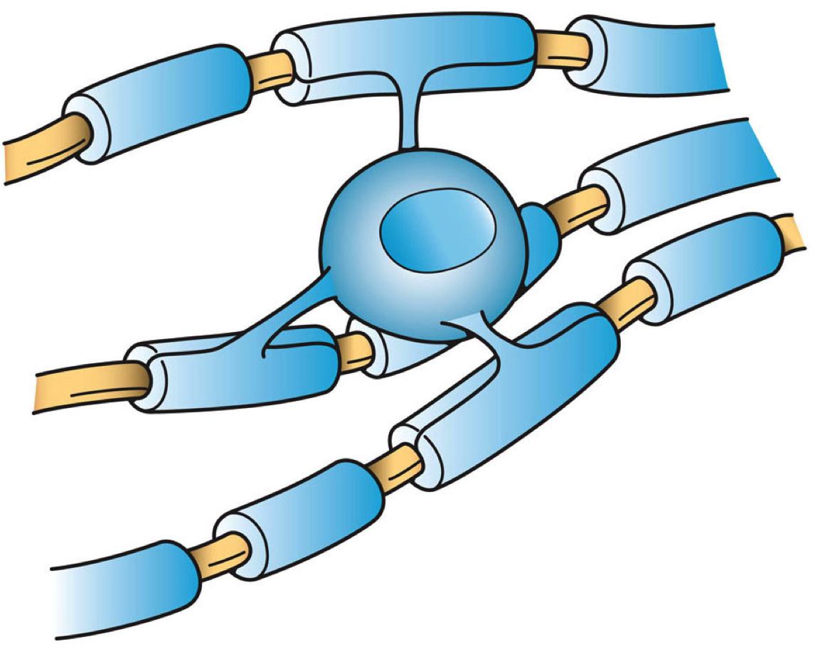 Artist's depiction of an oligodendrocyte insulation of nerve axons