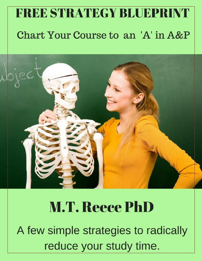 10 Tips For How To Learn Anatomy Physiology